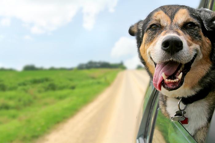 Wohnmobil mieten mit Hund, das ist dabei wichtig.